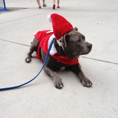 Photo taken at PetSmart by Theresa on 12/15/2012