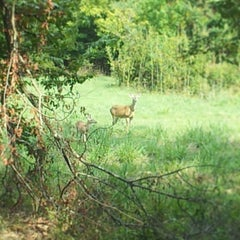Photo taken at Paul G. Boorman Trail by Nathanael T. on 9/13/2013
