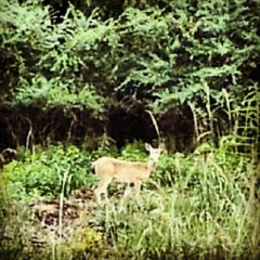 Photo taken at Paul G. Boorman Trail by Nathanael T. on 8/21/2013