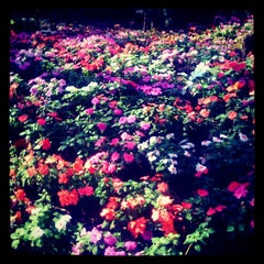 Photo taken at Rachamankha Flora House Chiang Mai by MissIzss on 2/19/2013