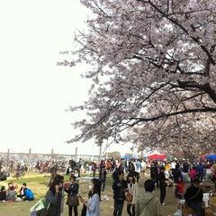 Photo taken at 여의도 한강공원 (Yeouido Hangang Park) by Hyeongchae K. on 4/21/2013