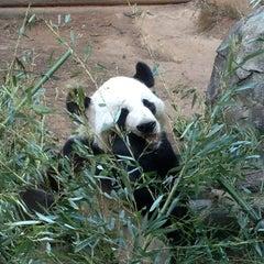 Photo taken at Zoo Atlanta by Shawn M. on 10/14/2012