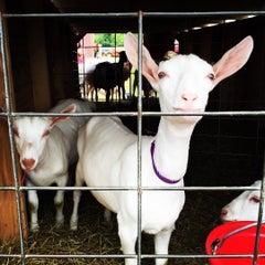 Photo taken at Oswego County Fair by Steven T. on 7/6/2015