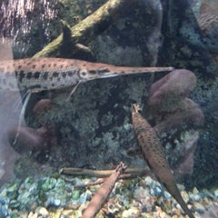 Photo taken at ECHO Lake Aquarium & Science Center by Lori R. on 1/20/2013
