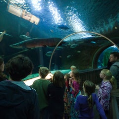 Photo taken at SEA LIFE Minnesota Aquarium by SEA LIFE Minnesota Aquarium on 8/15/2013