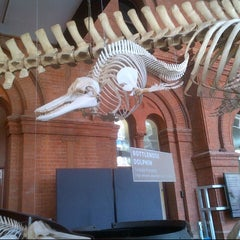Photo taken at South Australian Museum by Virginia G. on 3/23/2013