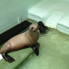Photo taken at Morro Bay Aquarium by Ann A. on 7/30/2013