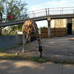 Photo taken at Abilene Zoo by Randy D. on 8/22/2014