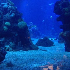 Photo taken at Coral Reef Restaurant by Kenny R. on 12/12/2012