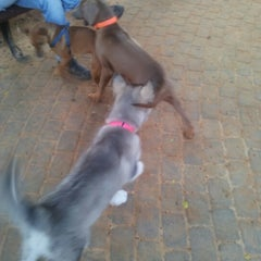 Photo taken at גינת הכלבים קיריית השרון by Ady B. on 12/23/2012
