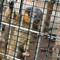 Photo taken at Duke Lemur Center by Melissa S. on 9/16/2012