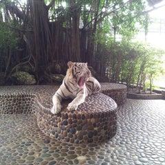 Photo taken at The Million Years Stone Park & Pattaya Crocodile Farm (อุทยานหินล้านปีและฟาร์มจระเข้พัทยา) by Marikul N. on 10/31/2012