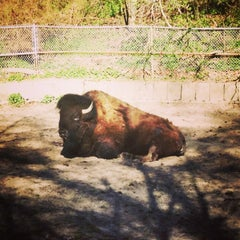 Photo taken at High Park Zoo by Wendy K. on 5/5/2013