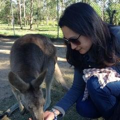 Photo taken at Lone Pine Koala Sanctuary by Naqia N. on 6/3/2013