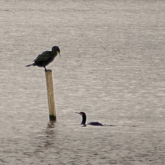 Photo taken at Fleet Pond by Barry P. on 1/20/2013