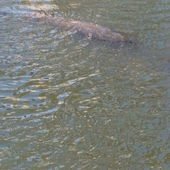 Photo taken at Manatee Viewing Center by Melissa W. on 2/15/2015