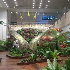 Photo taken at Singapore Changi Airport (SIN) by Em-em R. on 10/5/2013