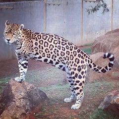 Photo taken at Bloemfontein Zoo by Stefan S. on 4/22/2013