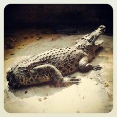 Photo taken at The Million Years Stone Park & Pattaya Crocodile Farm (อุทยานหินล้านปีและฟาร์มจระเข้พัทยา) by Vovan M. on 2/9/2013