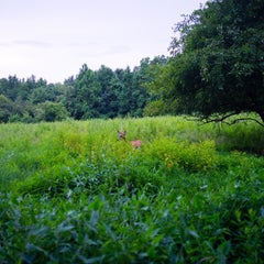 Photo taken at Marshlands Conservancy by 希冰 on 7/27/2015