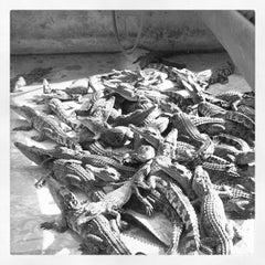Photo taken at The Million Years Stone Park & Pattaya Crocodile Farm (อุทยานหินล้านปีและฟาร์มจระเข้พัทยา) by Рома ч. on 4/5/2012