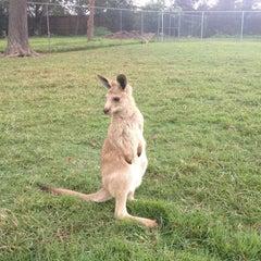Photo taken at Lone Pine Koala Sanctuary by Julien L. on 5/5/2013