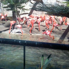 Photo taken at San Antonio Zoo by Laura F. on 2/16/2013