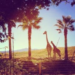Photo taken at The Living Desert Zoo & Botanical Gardens by Chiayu C. on 11/24/2012