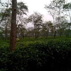 Photo taken at Kebun Teh Wonosari by Asti Dwi S. on 6/2/2015