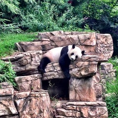 Photo taken at Smithsonian National Zoological Park by Eric M. on 7/26/2013