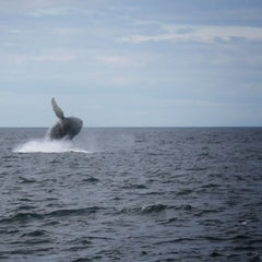 Photo taken at Bar Harbor Whale Watch Co. by Beaux P. on 6/21/2014