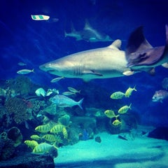 Photo taken at SEA LIFE Melbourne Aquarium by Mohammed U. on 12/30/2012