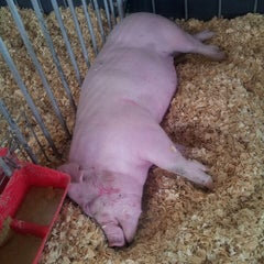 Photo taken at Swine Barn by Lucretia on 8/11/2013