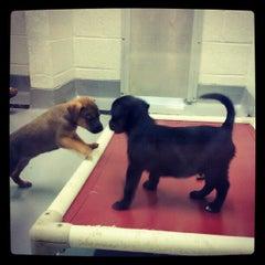 Photo taken at Atlanta Humane Society by James H. on 9/15/2012