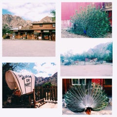 Photo taken at Bonnie Springs Ranch by Jamille Mae B. on 5/27/2014