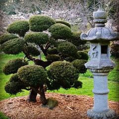 Photo taken at Japanese Tea Garden by Rafael S. on 3/25/2013