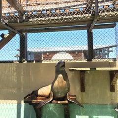 Photo taken at Morro Bay Aquarium by Borislav A. on 8/31/2014