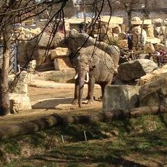 Photo taken at Zoo Praha | Prague Zoo by Никита К. on 4/14/2013
