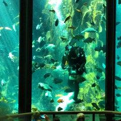 Photo taken at Monterey Bay Aquarium by Ashley S. on 6/19/2013