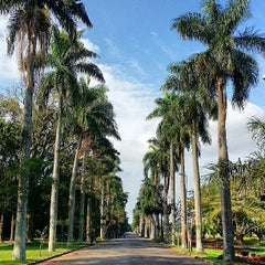Photo taken at Jardim Botânico de São Paulo by Raphael M. on 6/15/2013