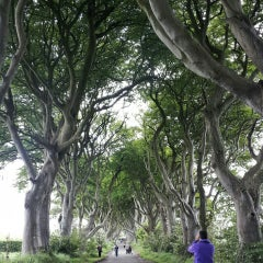Photo taken at The Dark Hedges by Anisa R. on 6/22/2015