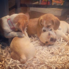 Photo taken at Citipups Chelsea by Leslie R. on 10/8/2012