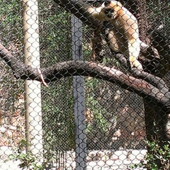 Photo taken at Monkeys Of The Zoo by JJ L. on 3/11/2013