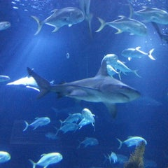 Photo taken at Henry Doorly Zoo and Aquarium by Jamie C. on 4/20/2013
