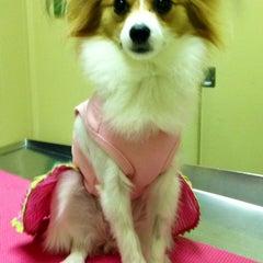 Photo taken at Tampa Veterinary Hospital by AMANDA VAN OVER @. on 6/9/2014