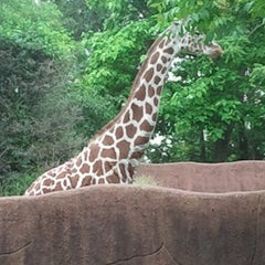 Photo taken at Saint Louis Zoo by Diane G. on 6/2/2013