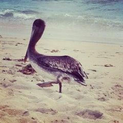Photo taken at Seal Beach by Анна С. on 7/1/2013