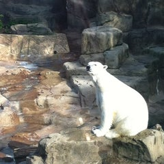Photo taken at Lincoln Park Zoo by Paige N. on 7/3/2013