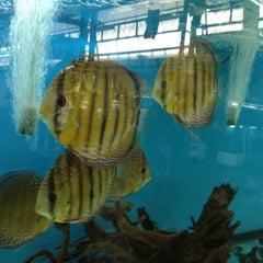 Photo taken at Qian Hu Fish Farm by Chin Hee C. on 8/25/2013