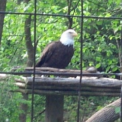 Photo taken at Bald Eagle Exhibit by Barbie R. on 5/27/2013